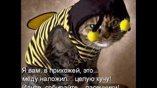 Смешные коты!!! Подборка N 5, Прикольные ржачные, веселые, коты, кошки, котята