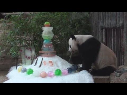 Falece Chuang Chuang, o oso panda embaixador de China en Tailandia