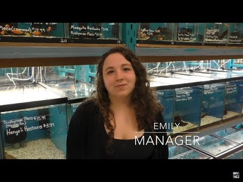 What's It Like To Run A Local Fish Store?! Local Fish Store Tour!