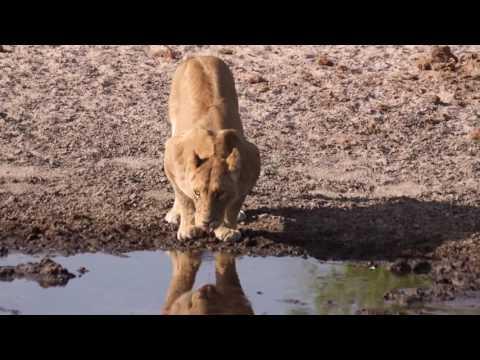 Botswana Mobile Camping Reisen | Botswana Reisen