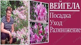 видео Цветущие рододендроны для сада и дачи: полный обзор сортов и видов