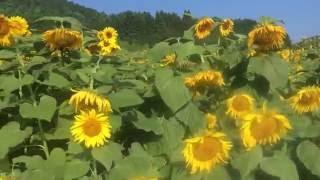 山口県萩市旧むつみ村県道13号線 サイクリング動画