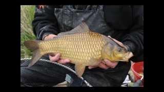 Lovio jedan covjek ribu - Zlatna Ribica