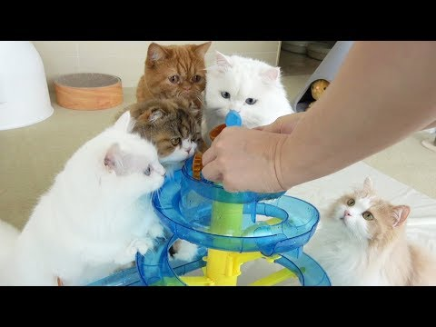 CAT WATER PARK IS OPENED! (ENG SUB)