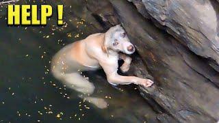 Уникальные кадры спасения животных. Люди помогают животным оказавшимся в беде #4