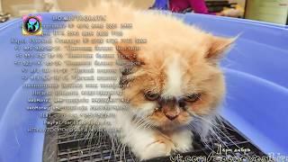Спасение бездомной кошки Нужно успеть спасти Времени мало