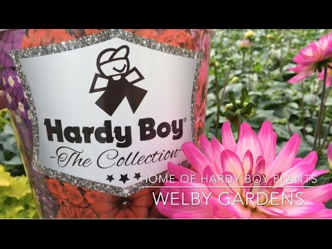 Charming Welby Gardens  Home Of Hardy Boy Plants