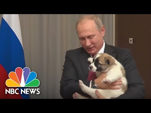 Bark In The U.S.S.R: Russian President Putin Receives Puppy From Turkmenistan's President | NBC News
