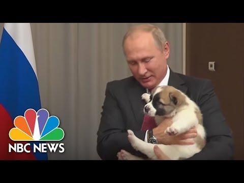 Bark In The U.S.S.R: Russian President Putin Receives Puppy From Turkmenistan's President | NBC News
