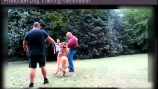 Protection Dog Training Manchester