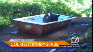 Caught on tape: Bear cools down in water trough