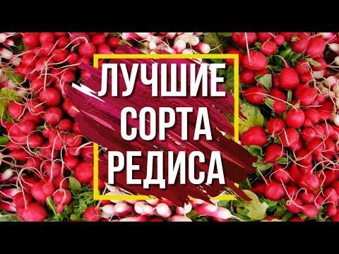Лучшие сорта редиса 👍 Семена от фирмы Гавриш 🌱Обзор семян редиса