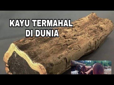 5 Kayu termahal di dunia, Salah satunya dari Indonesia