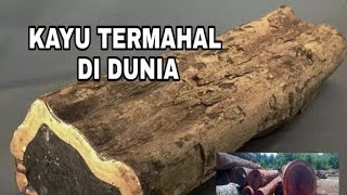 5 The Most Expensive Wood In The World, One Of Them Is From Indonesia