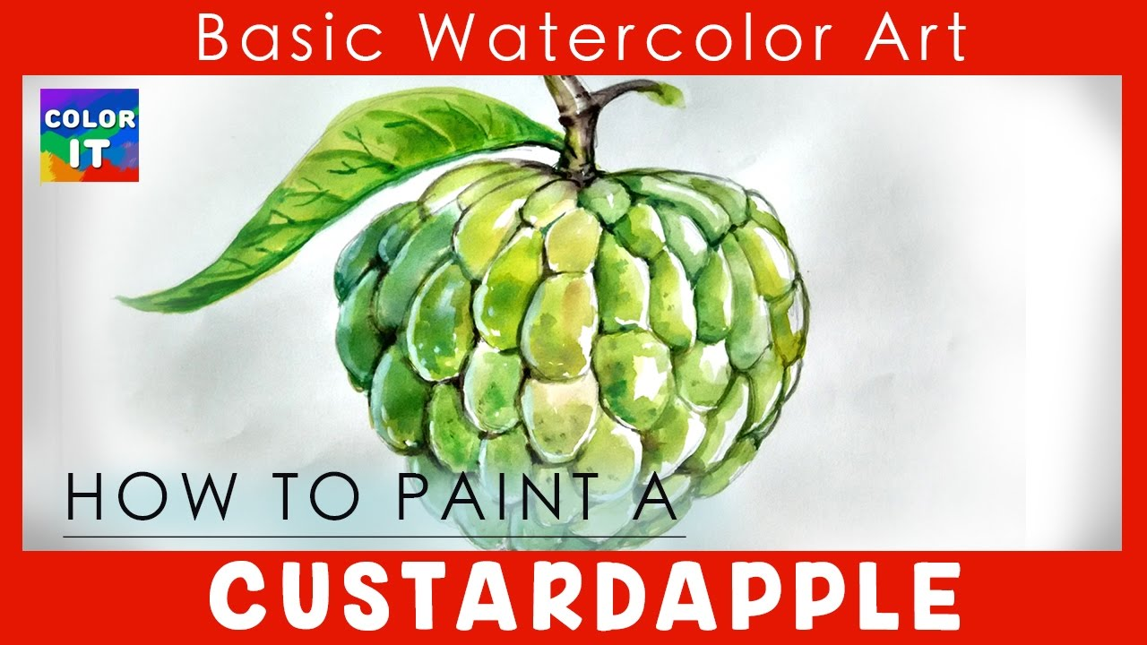 Learn Easy Steps To Draw Custard Apple