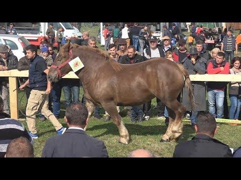 Concurs cu cai de frumusete    Baia Mare,  Maramures 7 oc.t 2017
