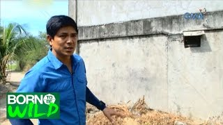 Born to Be Wild: Doc Nielsen searches for a Philippine Cobra in Bulacan