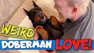 17 Weird Ways Dobermans Show Their Love