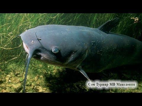 македония дунайский лосось рыбалка 3.6