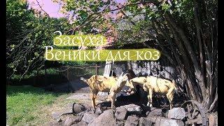 Деревенские будни. Засуха. Веники для коз. ||  Жизнь в деревне.
