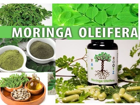 Medicinal and Therapeutic value|use of Moringa olifera Multivitamin strengthen the Immune System