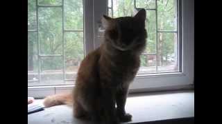 KSN Ласковый рыжий кот мурлыкает