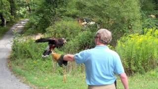 Falconry.mov