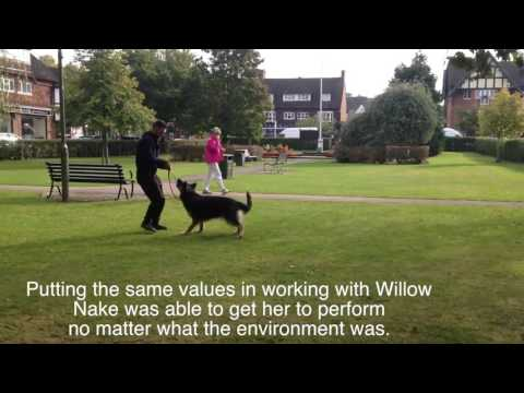 How to stop your Dog's fear reactive behaviour with Willow the German Shepherd