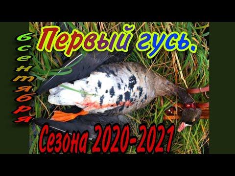 Охота в Казахстане 06.09.2020.Первый гусь сезона.