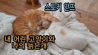 [Eng sub] 내 어린 고양이와 나의 늙은개/My …