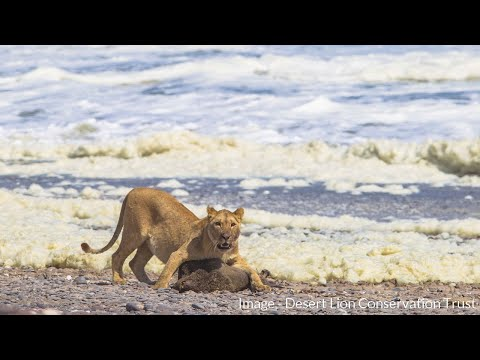 E55 MARINE FOOD RESOURCES - Desert Lion Conservation Trust