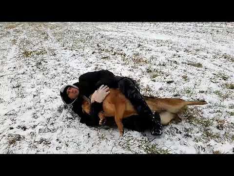 Как защититься от нападения собаки