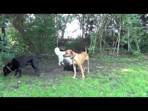 vip dog park HD