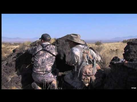Oryx Hunting In New Mexico
