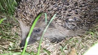 Andy touches Animals. Ep3 a hedgehog