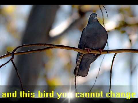 Free Bird - lynyrd skynyrd (Lyrics English)