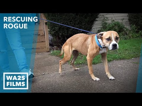 Caught On Camera!!! Dog Abandoned by Detroit Animal Control - Hope For Dogs Like My DoDo