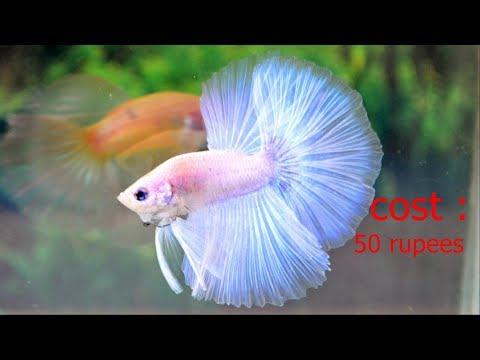 aquarium fishes || cost in india || video