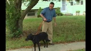 Snap Lead Dog Training Leash Demonstration