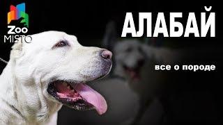 Алабай - Все о породе собаки | Собака породы - Алабай