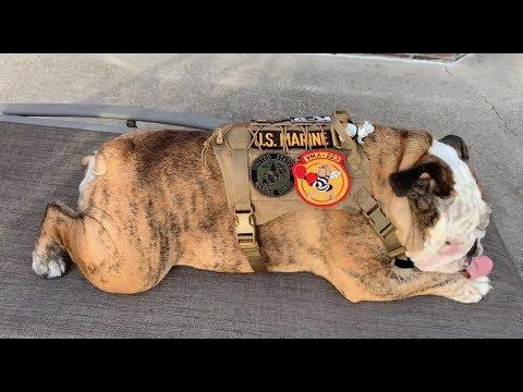 Reuben the Bulldog: Veteran's Day Parade Invite