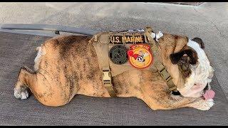 reuben-the-bulldog-veteran-s-day-parade-invite