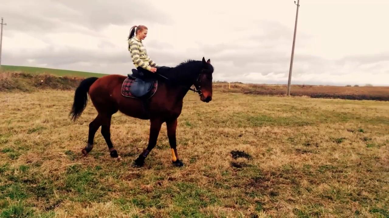 лошади фото необычные
