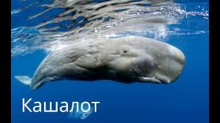 Самое большое животное кит млекопитающее 2017