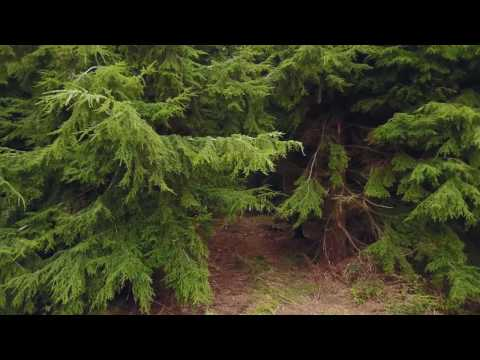 First Mavic Film 'Into The Woods'