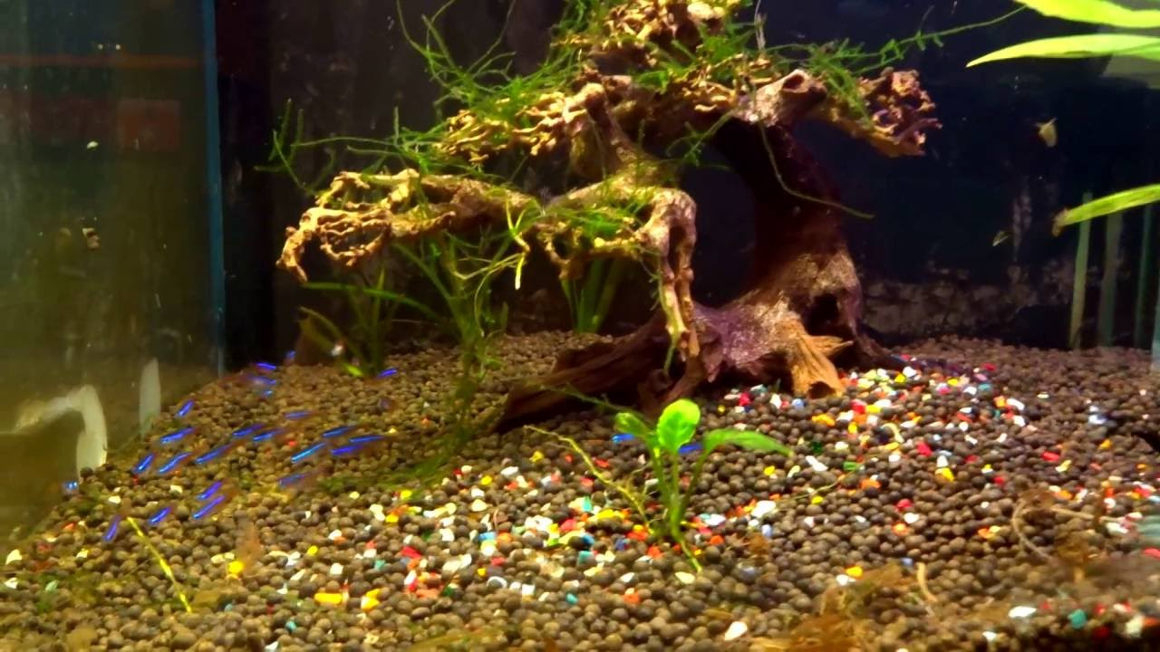 Fish aquarium in varanasi - Basic Planted Aquarium Setup For Neon Tetra By Banaras Aquarium And Pets India