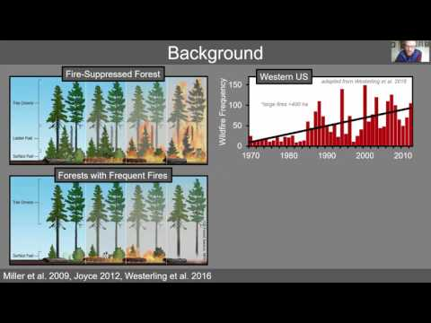 BALANCING FOREST ECOSYSTEM RESTORATION AND OLD-FOREST SPECIES CONSERVATION IN THE SIERRA NEVADA, CA