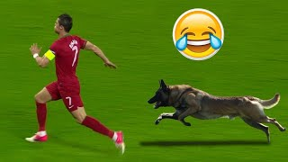 Animals on the Football Pitch ● Funny Moments ● HD ✔
