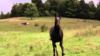 Black Beauty - Trailer