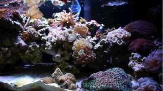 20 Gallon Long Nano Reef Tank (saltwater Aquarium)